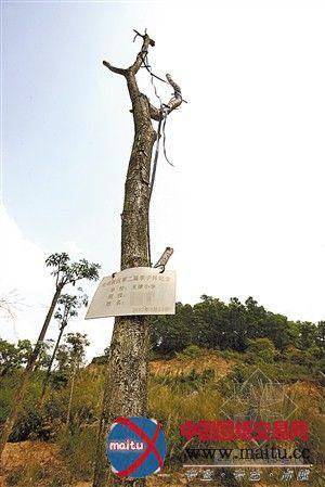 植树雕塑设计图