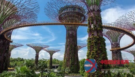 新加坡滨海湾花园中的超级大树